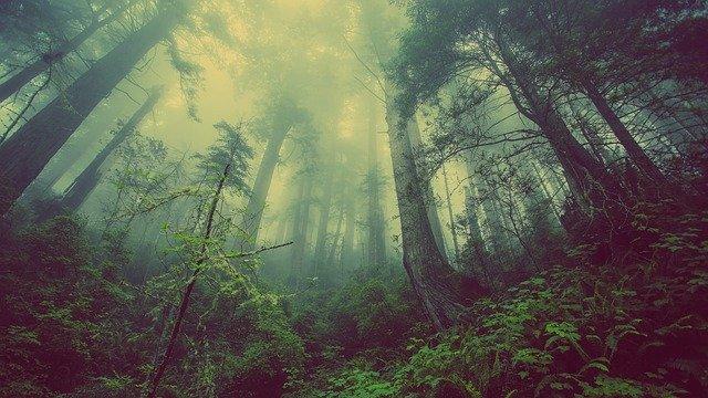 Umwelt Pellet presse für Holz